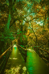 The colored paradise (geralddesmons) Tags: paradise paraiso green natural iguazu trail bosque forest reserve misiones argentina photography fotografia gerald desmons