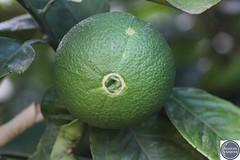 Verde que te quiero verde (Manuel Vázquez Franco-Hernandez Calleja) Tags: extremadura badajoz espaa