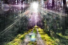 Failed photography (radimersky) Tags: failed nieudane zdjęcie photo photography forest las trac droga dzień słońce podsłońce falre lumix panasonic dmclx100 fourthirds 43 micro