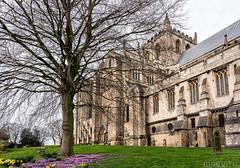 Ripon Cathedral (Mabvith) Tags: ripon england uk cathedral churchyard spring springtime yorkshire