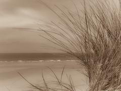 A new way of seeing (babs van beieren) Tags: sepia sea beach dune beachgrass coast ocean waves seascape 7dwf thursday bworsepia