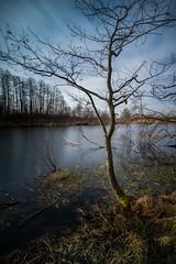 Puszcza Niepołomicka (Krzysztof Mikulski) Tags: puszcza niepołomicka las forest woodland long expousure voigtlander heliar 15 a7r