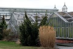 Behind the Greenhouse (Sockenhummel) Tags: fuji x30 fujifilm finepix fujix30 tulpe botanischergarten berlin gewächshaus greenhouse pflanzen gräser park garten