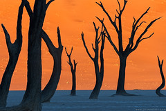 Ghost dance (Jirawatfoto) Tags: namibia deadvlei sossusvlei dead africa park national camelthorn vlei red desert travel sand blue dune sky namib natural landscape tourism scenery famous african dry clay sunlight pan acacia beautiful trees namibnaukluft naukluft nature tree orange outdoor day arid