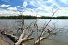 Lagoon of Rio Bita 1 (Aztlek) Tags: amanecer sonrise río river laguna lagoon ríobita bitariver bita fotoexpedición fotoexpediciónorinoco vichada colombia photoexpedition orinocophotoexpedition trekking hiking senderismo caminata viajaryvivir afsdxnikkor18200mmf3556ged nikkor 18200mmf3556 f3556 f13556 ufraw ilovenature nikond7000 nikon d7000 nikongpsunit gpsunitgp1 gpsunit photography fotografía