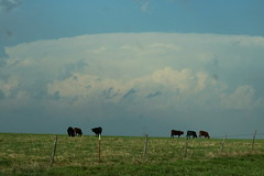 Oklahoma Storm Clouds and Cows (sgbrown56) Tags: nature weather storm stormclouds rain blue darkclouds oklahoma plains pasture cows blackcows barbedwirefence