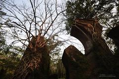 荒蕪 (風景獵人) Tags: taiwan 台灣 風景 風景獵人 landscape 苗栗 三義 勝興車站 建築 building 森林 樹木 龍騰斷橋