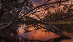 Bear witness (jenni 101) Tags: bestofnature australia australiansunset murrayriver gumtrees longexposure naturalbeauty river sunset water