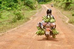 "Plantains on the road. Sanniquellie. Liberia  March 2017 #itravelanddance • <a style=""font-size:0.8em;"" href=""http://www.flickr.com/photos/147943715@N05/33536878411/"" target=""_blank"">View on Flickr</a>"
