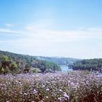 Lạc... Somewhere #hmumei #dalat #beautiful thumbnail
