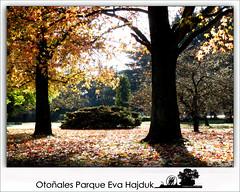 Otoñales parque Eva Hajduk - Diaz De Vivar Gustavo (Diaz De Vivar Gustavo) Tags: arboles diaz de vivar otoño invierno otoñales parque eva hajduk gustavo caida hojas hoja liquidambar natural landscape sunset naturaleza nature ranelenses