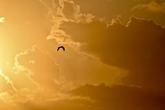 Sunset Ke'e Beach (Tatiana12) Tags: 2017 kauai hawaii sun bird sky sunset keebeach
