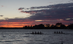 "Rowing at Sunrise • <a style=""font-size:0.8em;"" href=""http://www.flickr.com/photos/7605906@N04/33631778236/"" target=""_blank"">View on Flickr</a>"