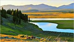 Hayden Valley, Yellowstone National park (Suzanham) Tags: wyoming montana haydenvalley valley yellowstonenationalpark yellowstone nature