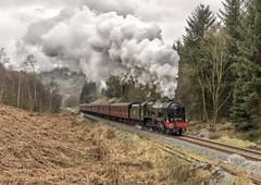 Yorfalls Wood (4486Merlin) Tags: 46100 england europe exlms heritagerailways lms7proyalscot northeast northyorkshiremoorsrailway railways steam transport unitedkingdom newtondale northyorkshire gbr royalscot nymrmattfisher46100charter