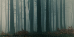 When night falls... (stray_light_rays) Tags: forestphotography forests trees woodland woods fall dark moody scenics scenery foggy mist mystical misty atmospheric atmosphere evening afternoon poland
