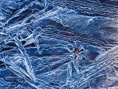 Fleur des glaces (josboyer) Tags: fleur flower glace ice hiver winter bleu