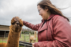 medina-7718 (FarFlungTravels) Tags: alpaca animal farm medinacounty onefineday shear wool