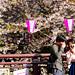 Cherry Blossoms in The Meguro River : 目黒川の桜