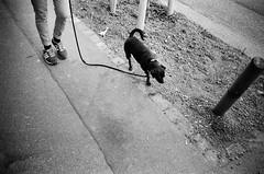 here doggy doggy (gato-gato-gato) Tags: 35mm ch contax contaxt2 iso400 ilford ls600 noritsu noritsuls600 schweiz strasse street streetphotographer streetphotography streettogs suisse svizzera switzerland t2 zueri zuerich zurigo z¸rich analog analogphotography believeinfilm film filmisnotdead filmphotography flickr gatogatogato gatogatogatoch homedeveloped pointandshoot streetphoto streetpic tobiasgaulkech wwwgatogatogatoch zürich black white schwarz weiss bw blanco negro monochrom monochrome blanc noir strase onthestreets mensch person human pedestrian fussgänger fusgänger passant sviss zwitserland isviçre zurich autofocus