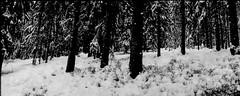combloux, panorama, 13 (Patrick.Raymond (3M views)) Tags: montagne neige hiver arbre bois foret alpes haute savoie montblanc combloux argentique lomography horizon perfekt expressyourself