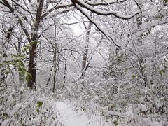 IMG_2826 (sjj62) Tags: s90 snow snowscape lith lakeinthehillsil winter winterscape