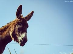 Holegaria (RocioSM1) Tags: animal photooftheday burro sky cielo blue azul canon capture españa spain like fotoanimal foto photo camera camara pic smille light sunny sol animales