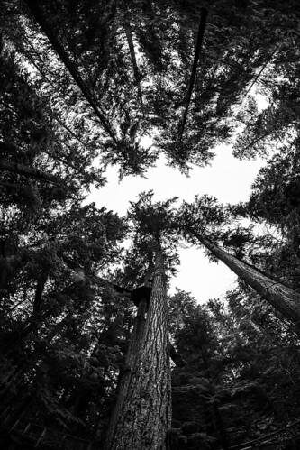 capilano treetop