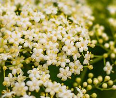 all the little live things (risaclics) Tags: make me smile 50mm18 7dw april2017 florida nikond610 flora flowers makemesmile smileonsaturday seasonsbeauty