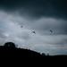Paragliding in a dark sky