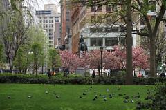 IMG_1377 (kz1000ps) Tags: newyorkcity nyc manhattan architecture urbanism cityscape unionsquare lawn grass spring