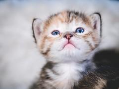 MARIAN SIMON PHOTOGRAPHY (MARIAN SIMON PHOTOGRAPHY) Tags: babycat littlecat little cat cats katze katzenbabys omd olympus em1markii tiere haustiere babys niedlich sweet cute süss tiershooting