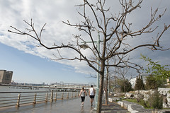 Tribeca Hudson River Park (Terese Loeb) Tags: hudsonriverpark park rain wet deadtree tree citypark urbanpark hudsonriver river manhattan lowermanhattan downtownmanhattan newyorkcity newyork couple walking spring springtime