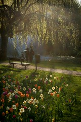 Spring feelings in the park (martintimmann) Tags: spring light sunrays park bench flower tulip