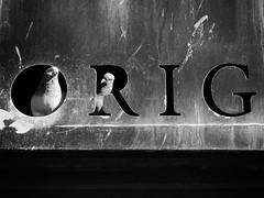 Pigeon Holes: The Sequel (Neil Johansson LRPS) Tags: fuji fujifilm x30 fujifilmx30 digital black white blackandwhite monochrome light dark noir urban urbanphotography urbanwales photo photograph photography landscape birds pigeons text yrhyl rhyl denbighshire northwales wales cymru uk
