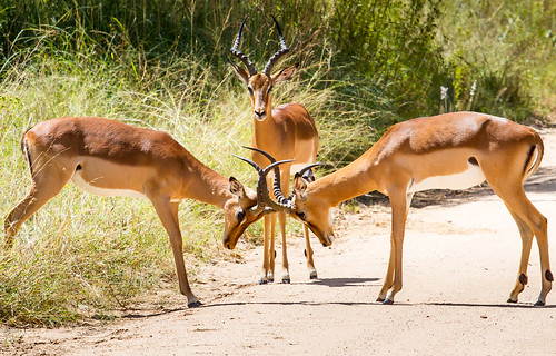 KrugerParkREIZ&HIGHRES-60