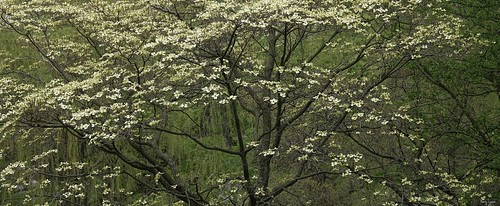 """Forest in Springtime • <a style=""""font-size:0.8em;"""" href=""""http://www.flickr.com/photos/52364684@N03/34243195871/"""" target=""""_blank"""">View on Flickr</a>"""