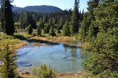 Ink Pots Pond Landscape (pokoroto) Tags: ink pond landscape pots アルバータ州 alberta canada カナダ 8月 八月 葉月 hachigatsu hazuki leafmonth 2016 平成28年 summer august