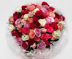 Mary, I love you. (ragnar1984) Tags: rose ros bukett birthday födelsedag blommor flowers cc creativecommons bouquetofroses