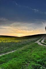 Portrait sunset (Ben Wink Photography) Tags: uk sunset wild summer england field photography suffolk nice aperture nikon ben wildlife farming norfolk rape 1855mm wink hdr d90