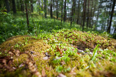 11 June, 15.37 (Ti.mo) Tags: forest finland island iso200 selected 24mm summerhouse kesmkki saari 24mmf14 0ev  secatf24 nuottosaari