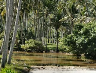 The Green and the Brown. Setangi River, Setangi, Lombok, Indonesia