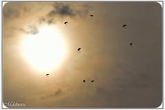 Selec Club (2) (M DEBIERRE) Tags: sea france saint canon de la le nicolas edge falcon mustang 20 tornado jacques tigre rennes fury 540 2012 stearman p51 transall c160 patrouille rafale alphajet wingwalkers ivanoff zivko yak3 mdebierre