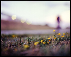 bicycling at dusk | Pentax 6x7 105mm 2.4 | Fuji Provia 400X 120 medium-format slide film (*AndrewYoungPhoto* (writing_with_glass)) Tags: flowers bike bicycle mediumformat cycling bokeh outdoor dusk lifestyle depthoffield handheld fujifilm 6x7 manualfocus boulderco iso320 shallowdepthoffield bouldercolorado biketrail shallowdof pentax6x7 pentax67 mediumformatfilm vintagecameras nonoisereduction colortransparencyfilm colorslidefilm 05ev mediumformat120 nonr writingwithglass andrewyoungphotonet copyrightandrewlyoung nomirrorlockup nomlu lr4sharpening1203pixeldetail60 vuescanmultexp fujifilmprovia400x120film 49mmf11equivalent takumarsupermulticoated105mm24lens epsonperfection3200ghettoscanner3200dpi 20130809flickrexplored68 adobelightroom16bittiffto8bitjpgconversion