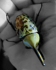 The bugs we are looking for (mindfulmovies) Tags: cameraphone street people urban blackandwhite bw public monochrome daylight blackwhite noiretblanc availablelight candid creative citylife streetphotography photojournalism cellphone streetportrait streetlife mobilephone characters streetphoto popular schwarzweiss urbanscenes blackdiamond decisivemoment streetshot iphone hardcorestreetphotography blackwhitephotography gettingclose streetphotographer publiclife documentaryphotography urbanshots mobilesnaps candidportraits seenonthestreet urbanstyle streetporn creativeshots mobilephotography decisivemoments biancoynegro peopleinpublicplaces streetfotografie streetphotographybw takenwithaniphone lifephotography iphonepics iphonephotos iphonephotography iphoneshots absoluteblackandwhite blackwhitestreetphotography iphoneography iphoneographer iphone3gs iphoneographie iphonestreetphotography withaniphone streettog emotionalstreetphotography mindfulmovies editanduploadedoniphone takenandprocessedwothiphone3gs
