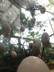 08252013-56 (machu picchu) Tags: sandiego egg eggs sandiegozoo dlused safaripark sandiegozoosafaripark
