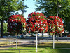 Vackra blommor i Hallsberg 2013-07-20 (Torgil Jarnling) Tags: blommor vackra hallsberg 20130720