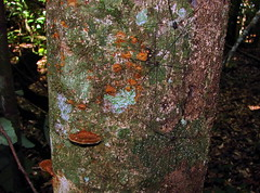 fungi, lichens, mosses (Hesperia2007) Tags: mushroom moss flora fungus lichen tropics mycology westernghats southasia southernindia