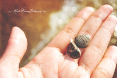 (Krista Cordova Photography) Tags: lake beach water seashells hand lakemichigan seashell sparkling tinyshells