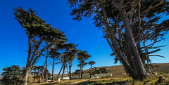 Pierce Ranch Cyprus Trees Tomales Point - Point Reyes National Seashore (Dunby PICS) Tags: ocean ranch park county trees beach point photo marin pic national pierce seashore reyes mcclure tomales cypruss dunby